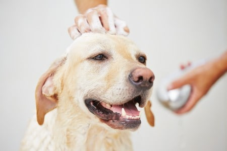 benefits of mobile dog grooming in Singapore
