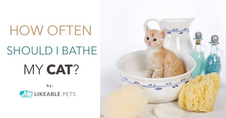 CAT-BATH-Grooming-tips-Singapore