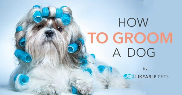 Pet Grooming Tips How to Groom a dog