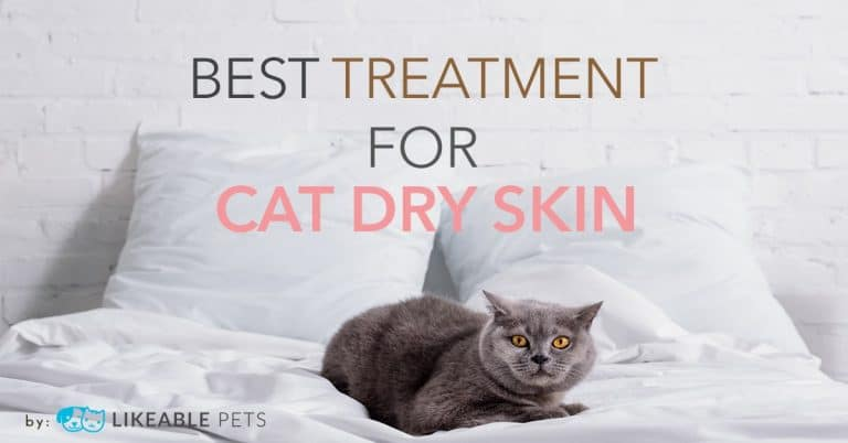 Best cat treatment for dry skin