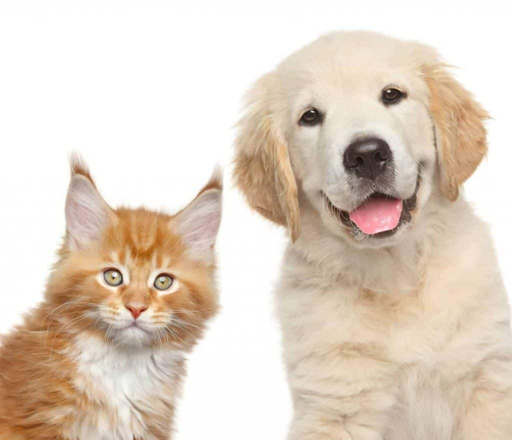 dog and cat mobile grooming services in Singapore