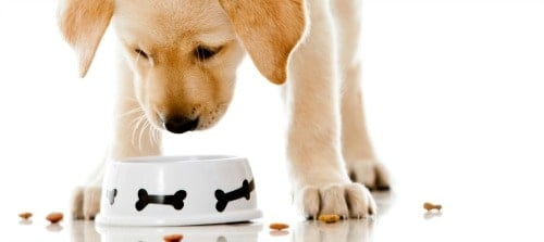 dog food poison treatment in Singapore