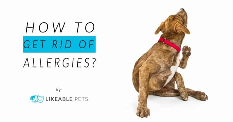 How to get rid of allergies for dogs