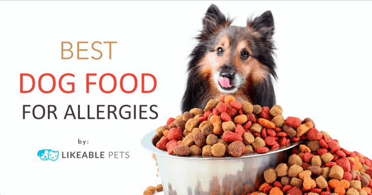 dog groomers best food for allergies Singapore
