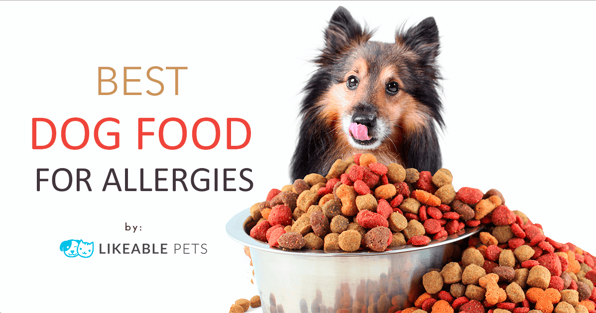 Best Dog Food for Allergies 2020