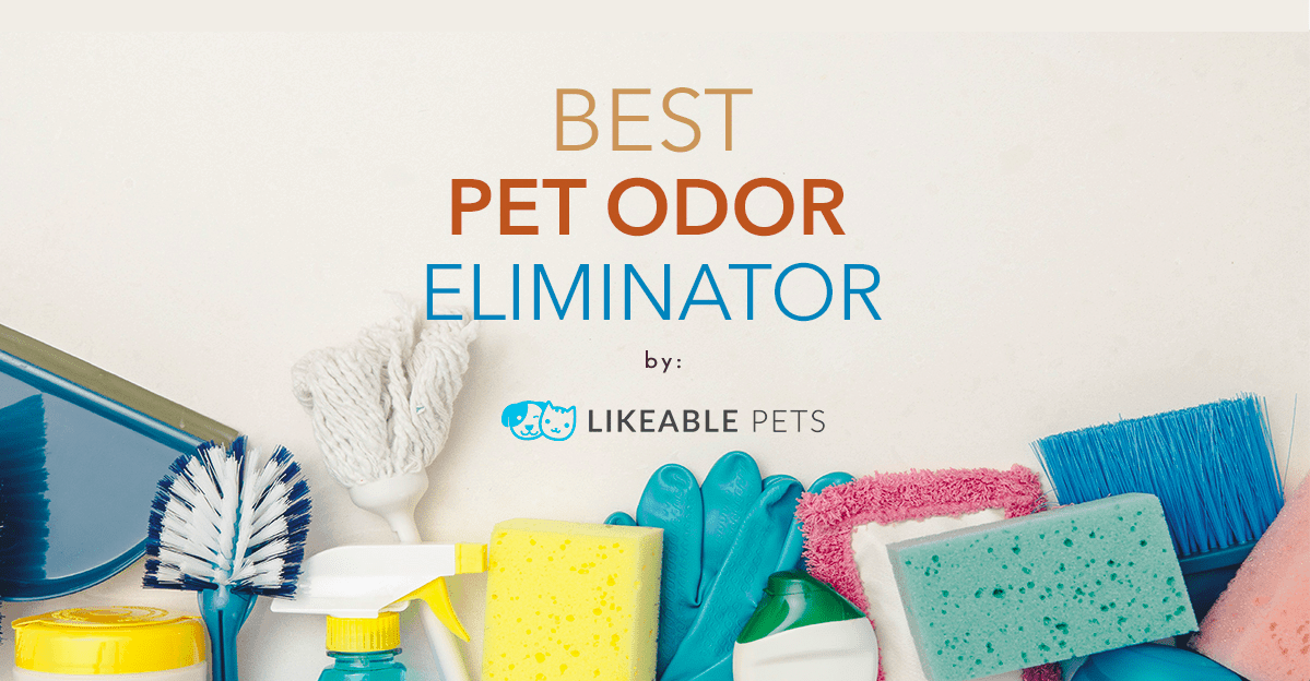 Best Pet Odor Eliminator 2020