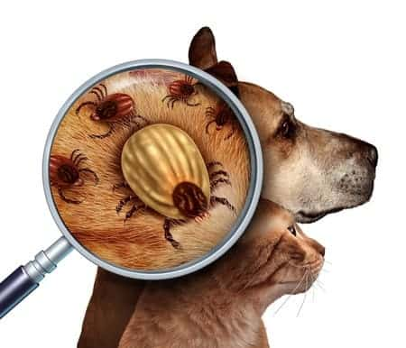 grooming services tick and fleas treatment in Singapore