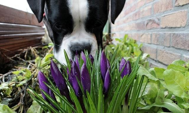 top five dog senses in Singapore