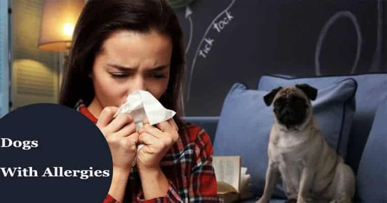 Types Dogs Allergies And Treatments For Them