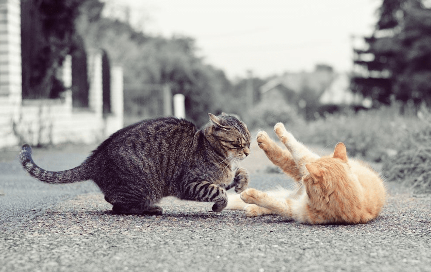 Why My Cats Are Hissing At Each Other After Grooming And How I Can Stop The Aggressive Behaviour