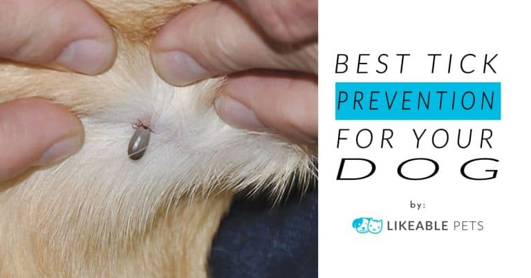 Best tick prevention for dogs