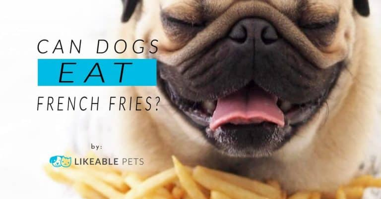 can dog eat french fries?