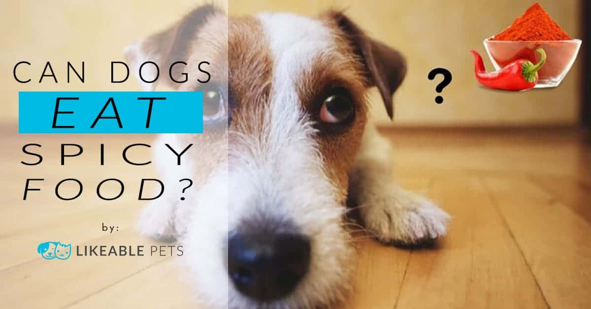 Can Dogs Eat Spicy Food?