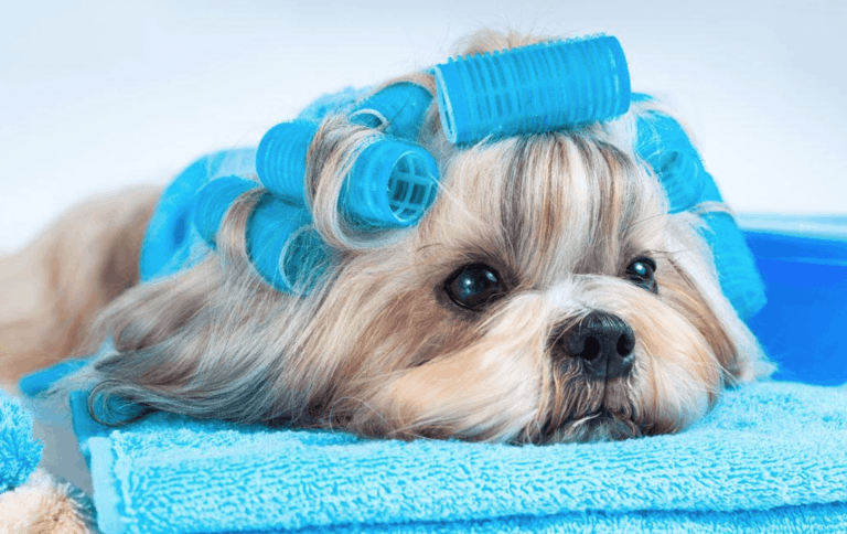 pet grooming procedure Singapore