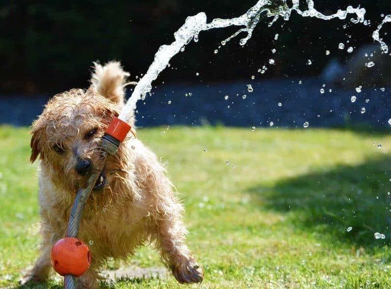 dog grooming process