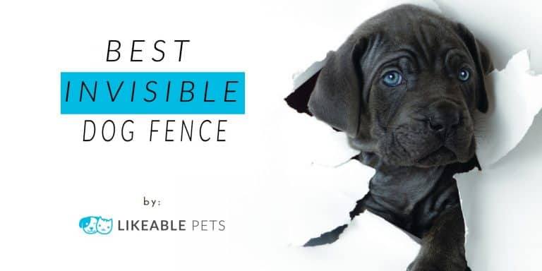 best invisible dog fence