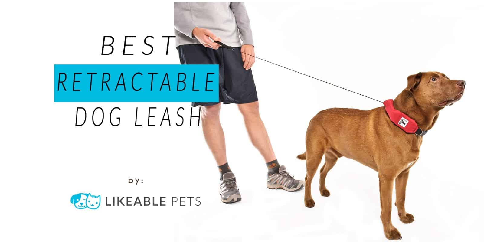 Best Retractable Dog Leash: 10 Options for your Pet
