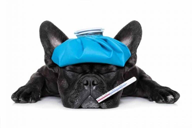 dog groomer sick treatment in Singapore