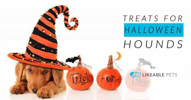 Treats for Halloween hounds