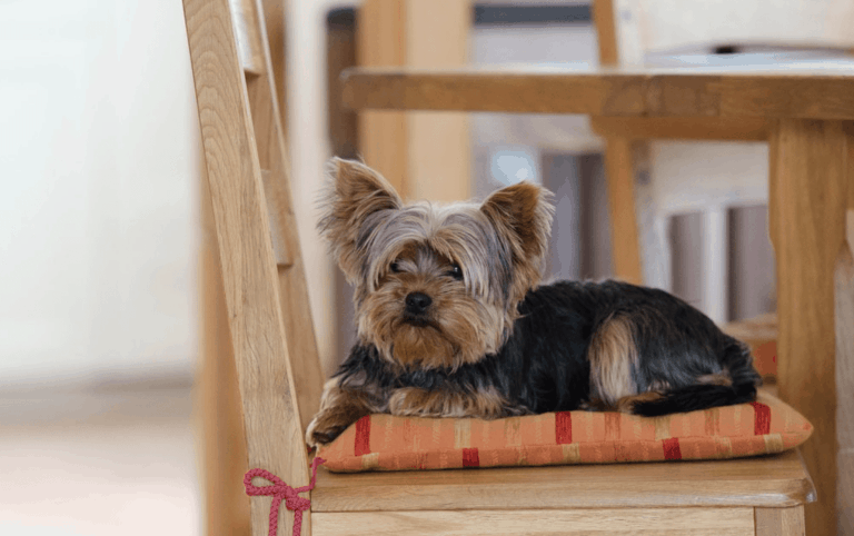 dog grooming treatment in Singapore