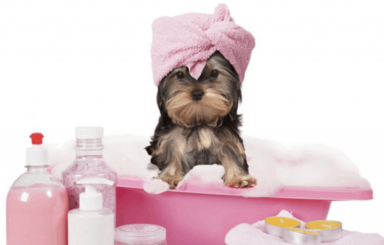 dogs bathing process mobile groomers in Singapore