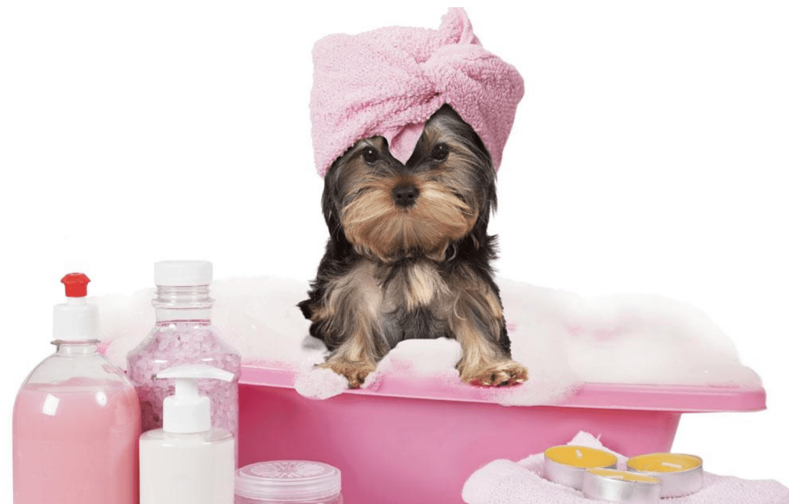 How To Fluff A Dog's Hair After Shampoo?