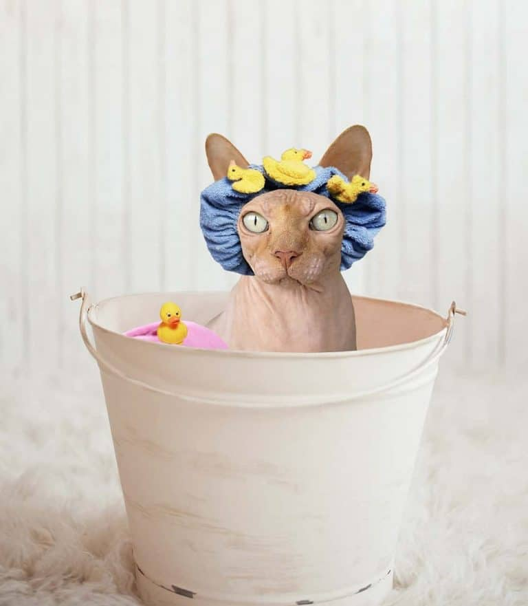 cats bathing process mobile groomer Singapore