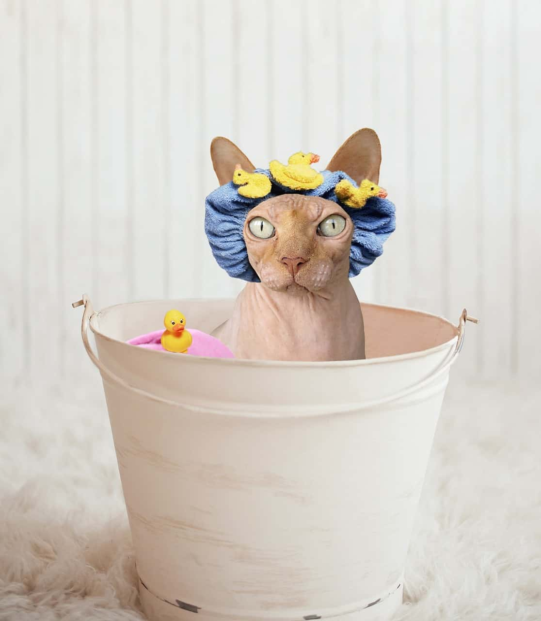 Do Indoor Cats Need Baths?