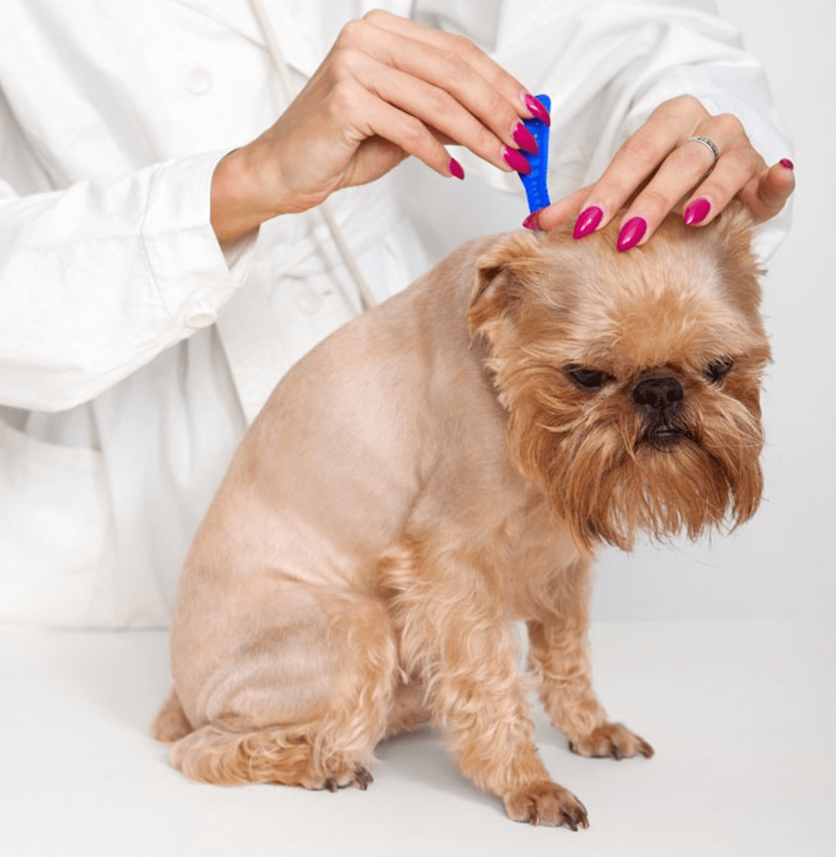 Home Treatments For Moist Dermatitis In Dogs—Hot Spots