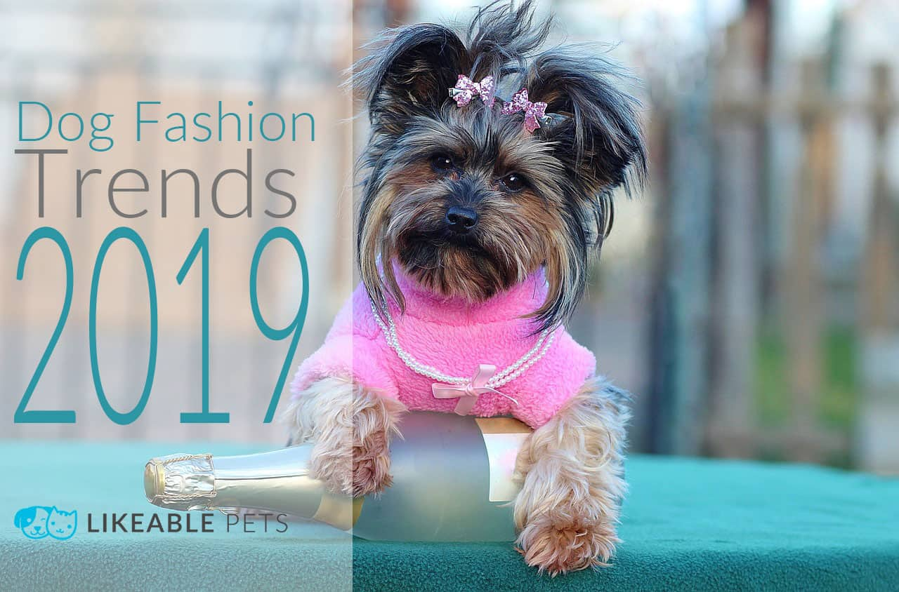 Groomers Discuss The Hottest Dog Fashion Trends in 2019