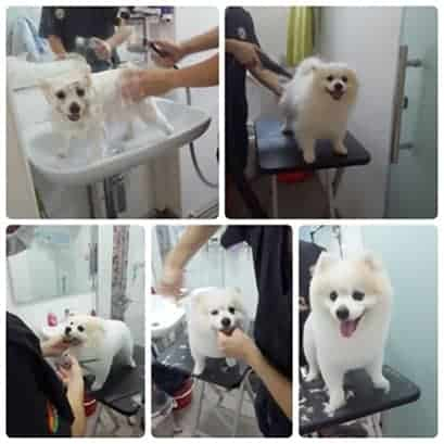 Home Dog grooming services in Singapore
